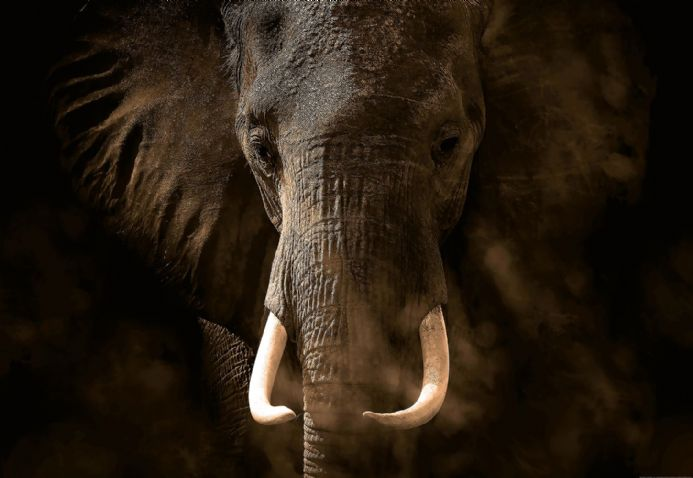 Photo wallpapers Elephant Ivory | Shop online
